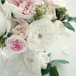 Beautiful Romantic Roses
