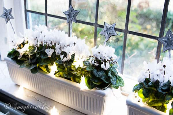 With flowering plants, ornaments and a string of lights window boxes become perfect window sill decorations for Christmas. by Songbirdblog.com