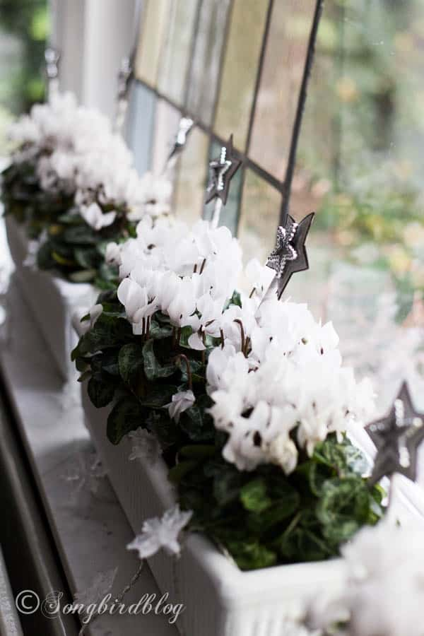 with flowering plants ornaments and a string of lights window boxes become perfect window sill - Window Box Christmas Decorations