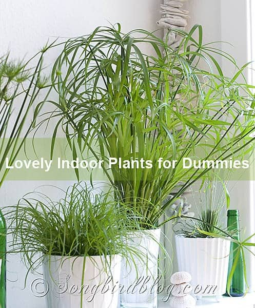 Easy and Lovely indoor plans for Dummies at Songbirdblog