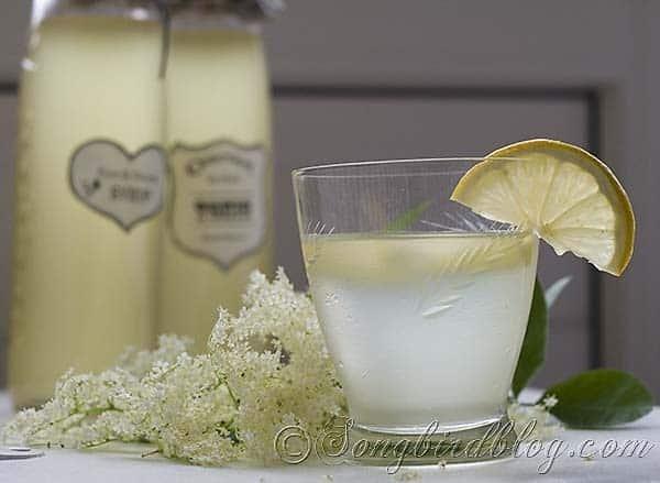 Elderberry Blossom Syrup 5