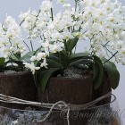 white orchids decoration