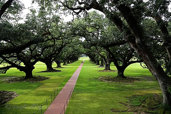 Oak Alley plantation Baton Rouge 1