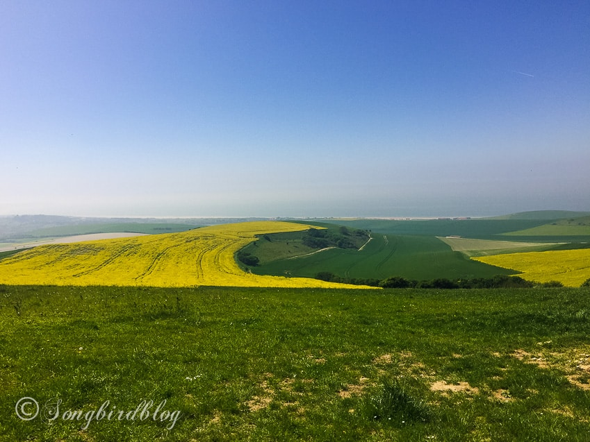 Opal Coast France rapeseed fields