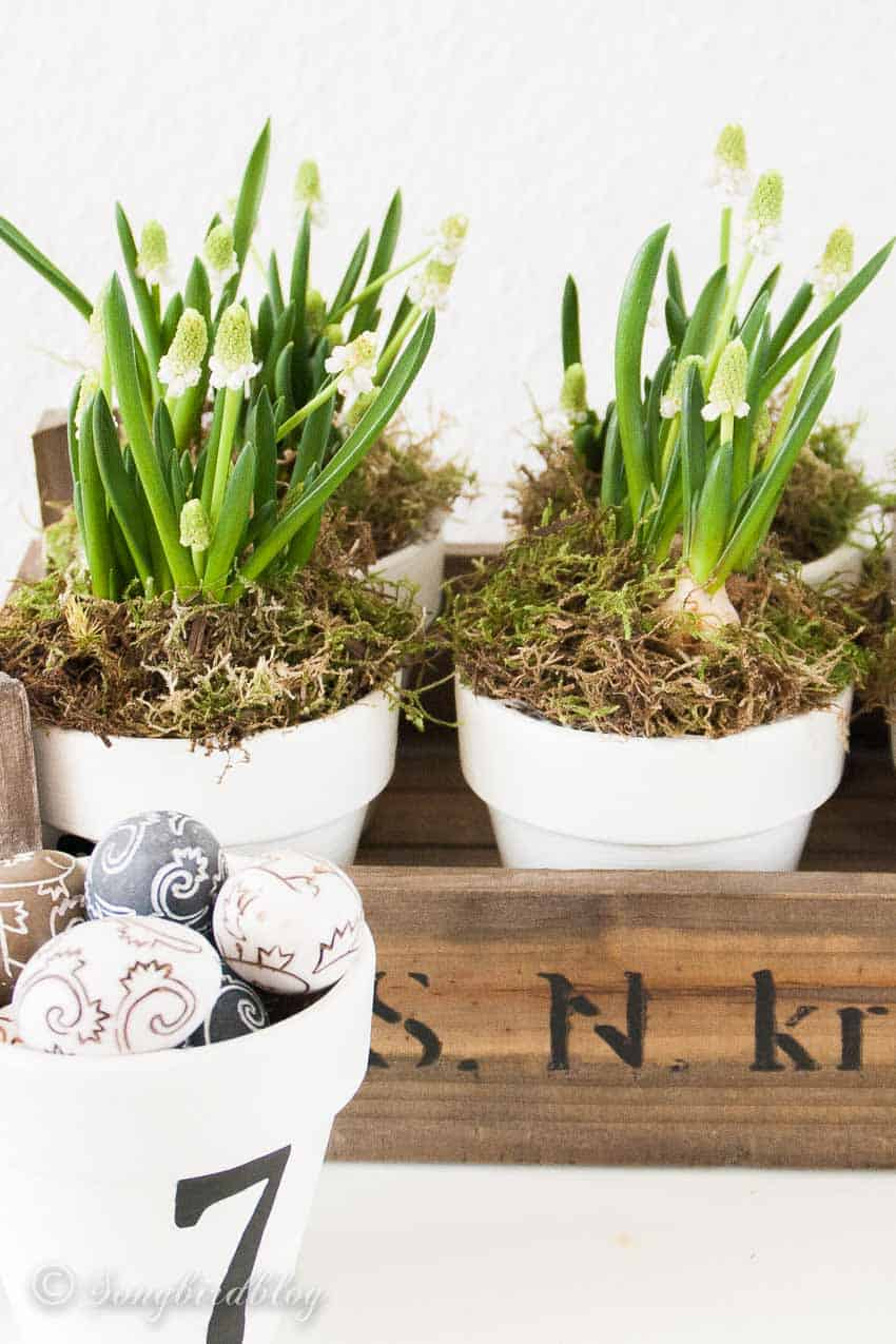 white grape hyacinths in a rustic crate with small easter eggs decorations