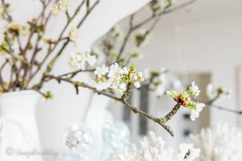 close up of branch with cherry blossoms