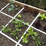 Building a vegetable garden for beginners