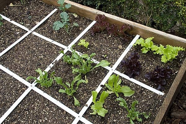 how to build a vegetable garden for beginners