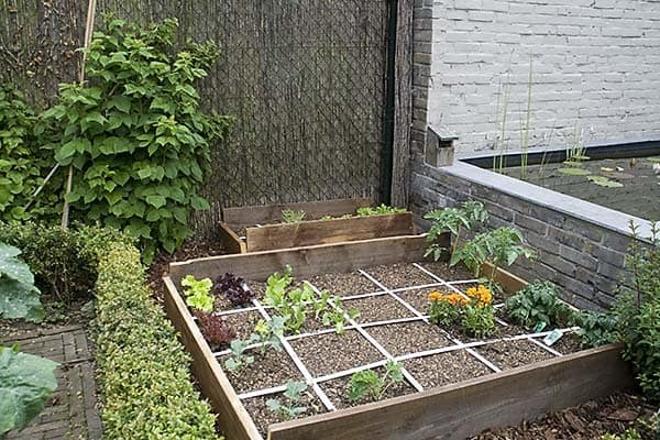 How to build a vegetable garden for beginners for Garden vegetable patch