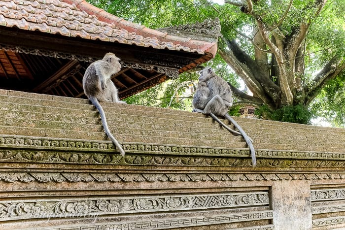 Holiday in Bali. Ubud village. Monkey forrest