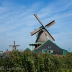 Visit Zaanse Schans Dutch traditional homes and windmills- thumb