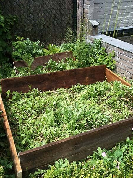How to build a vegetable garden for beginners - Weeding garden make work easier ...