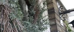 winter twig wreath