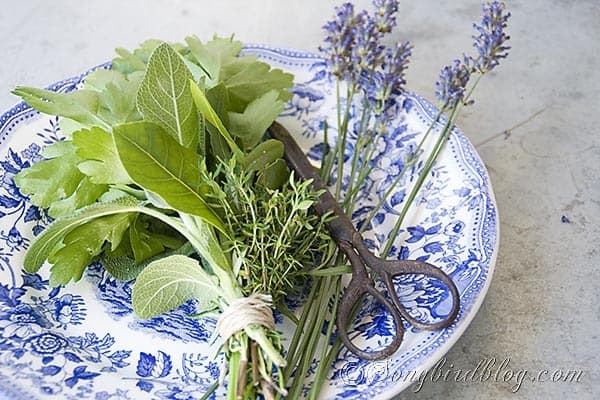 bouquet garni herbs cooking 2