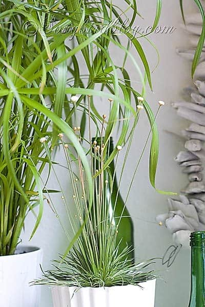 indoor plants mantel decoration easy green grass