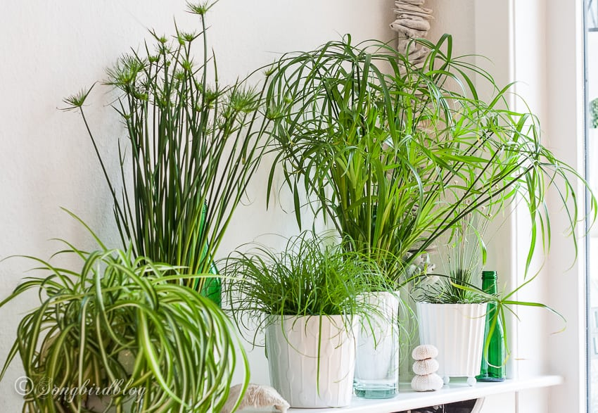 green grassy indoor plants
