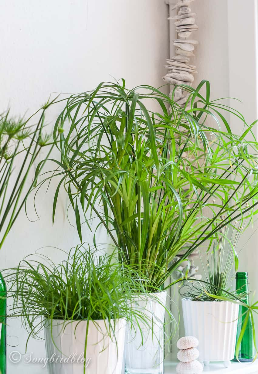 water loving indoor plants on mantel decor