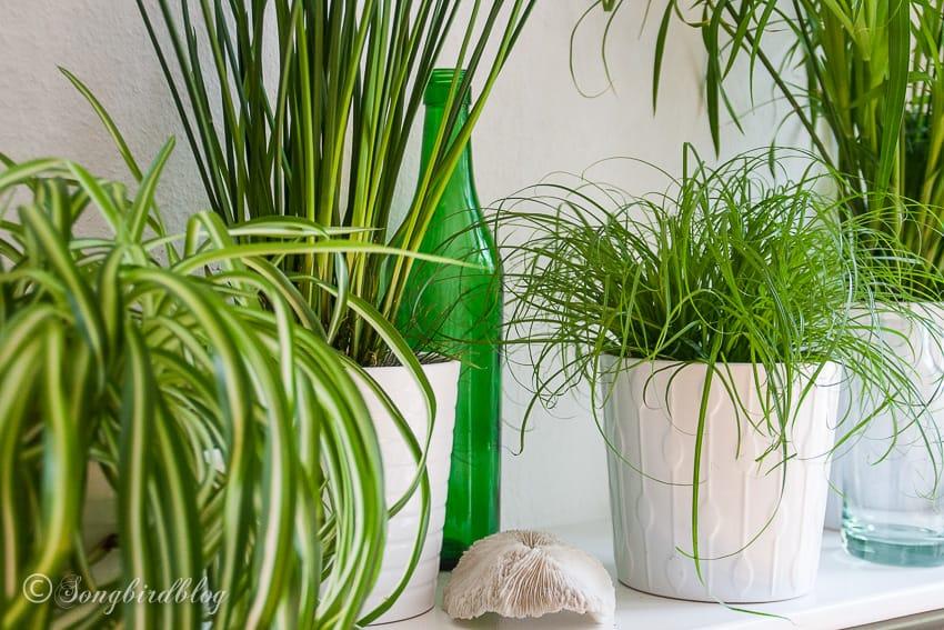 grassy houseplants