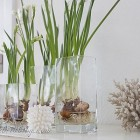 decorating for Spring with paperwhite bulbs