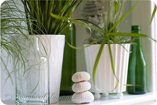 indoor plants mantel decoration easy green grass