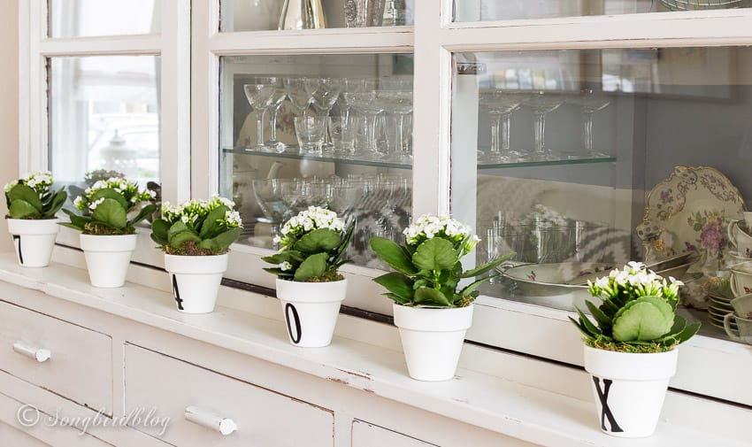 line of white containers with numbers and mini succulents