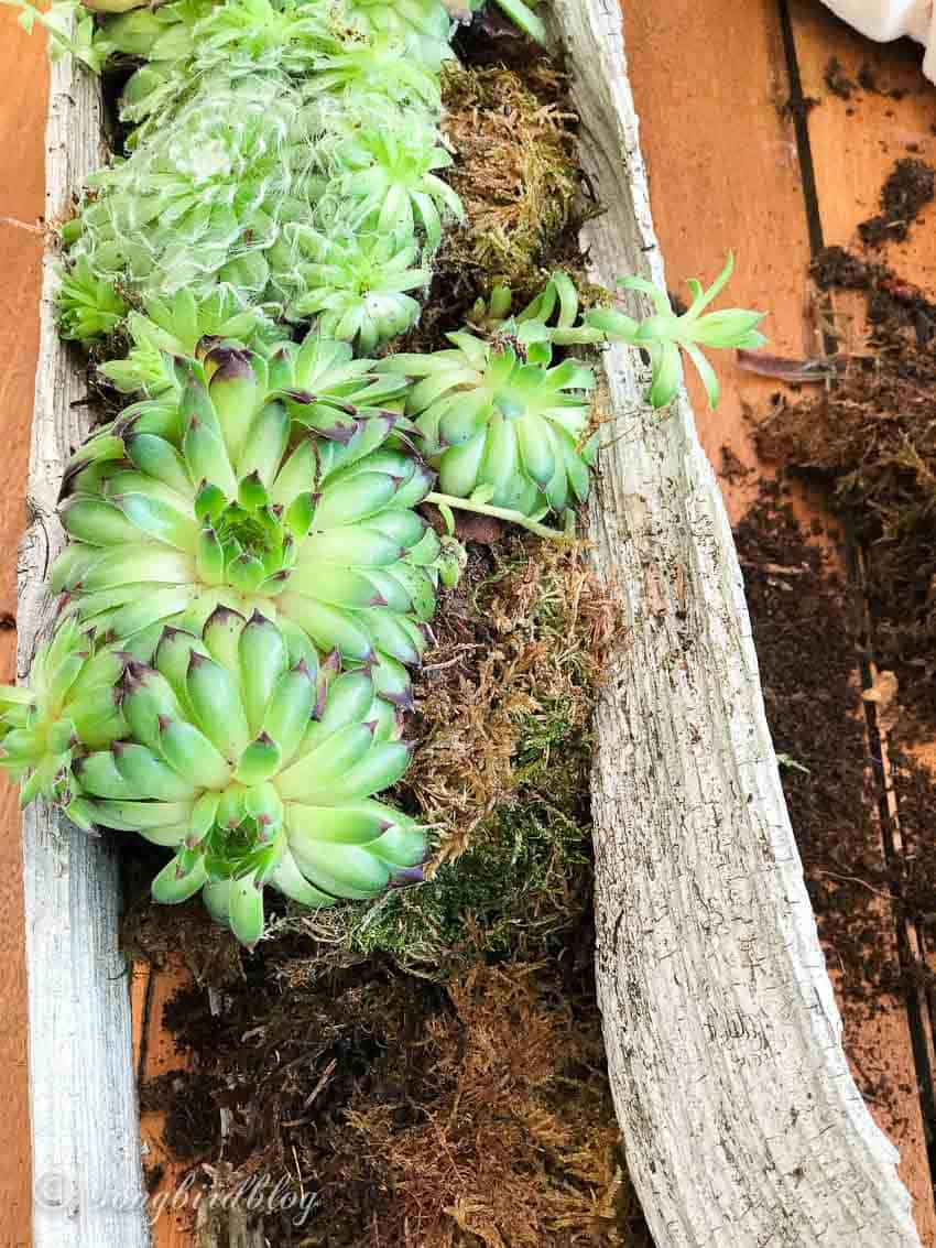 Wood Log Succulent Planter Idea