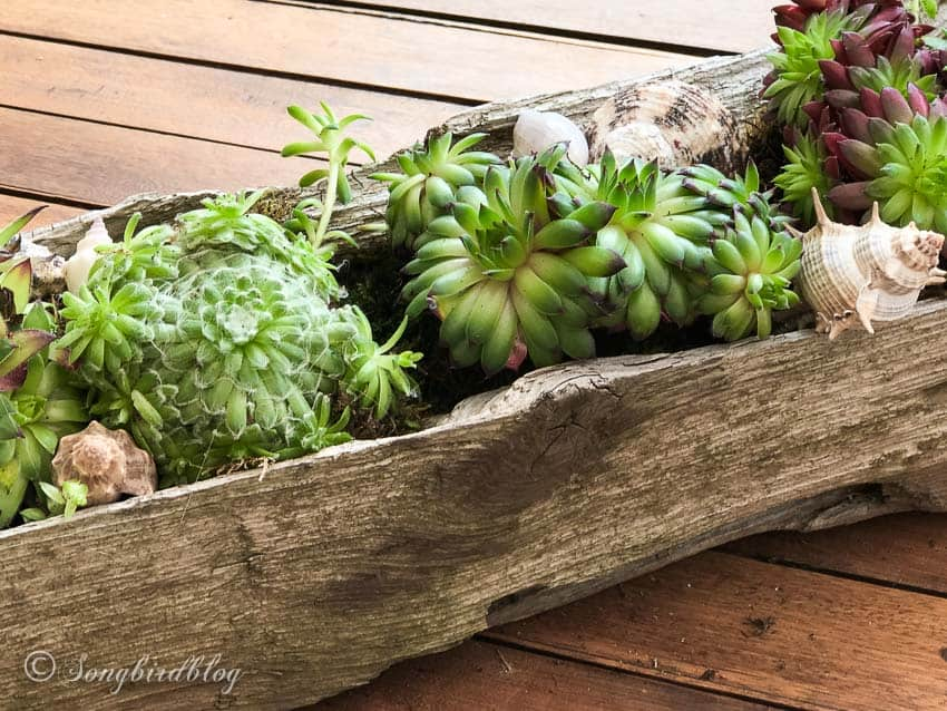 succulent planter DIY idea