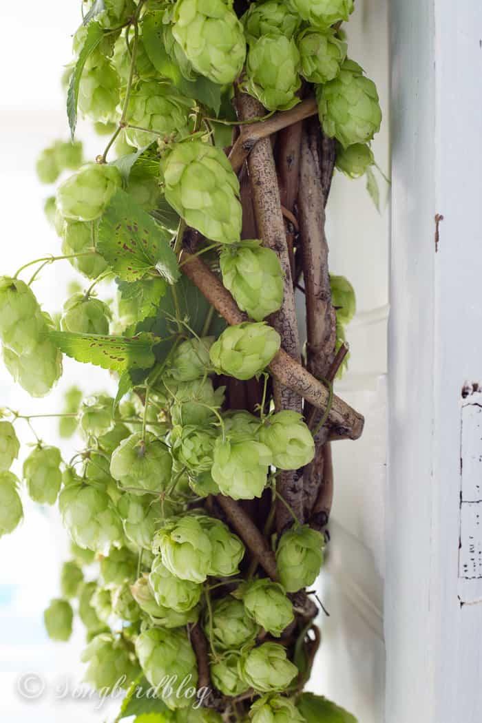 Fall hop wreath closeup