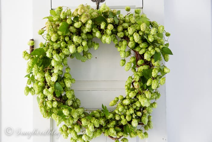 Fall hop wreath display