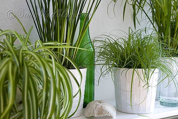 easy to grow green indoor plants from SongbirdBlog