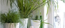 green plants mantel decoration at Songbirdblog
