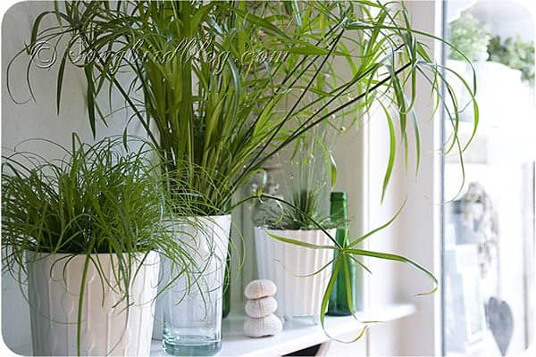 easy to grow indoor plants from SongbirdBlog