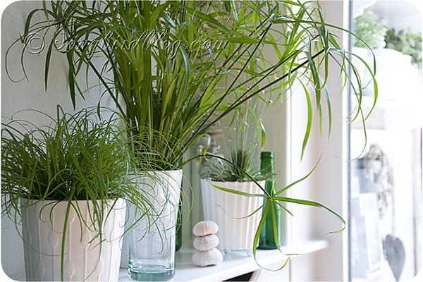 easy to grow indoor plants from SongbirdBlog