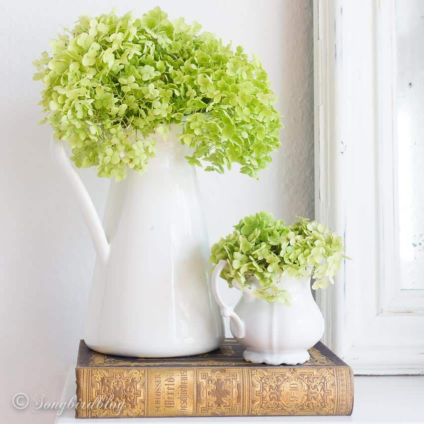White pitchers with green hydrangeas. Fall decorating on a budget
