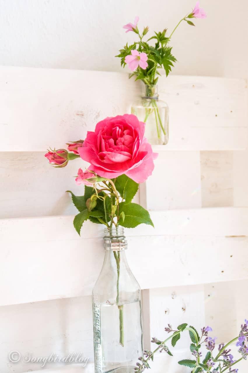 pink rose in vintage bottle
