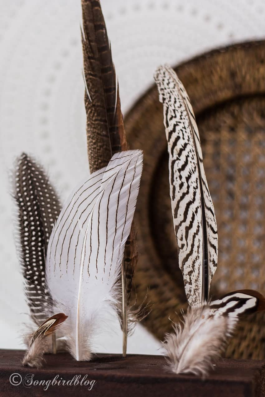 feathers in display closeup