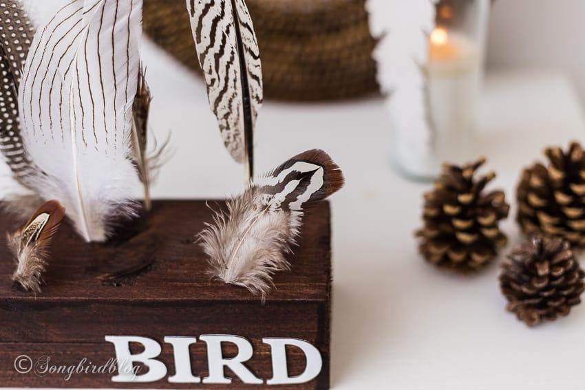 feather display closeup