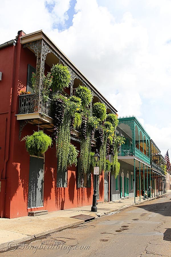 hanging plants New Orleans