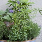 container with mixed herbs