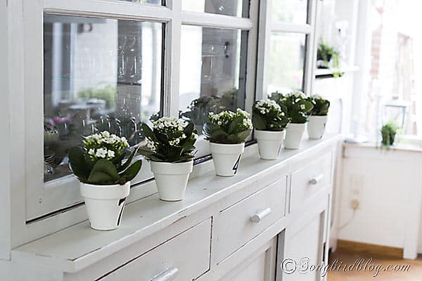 Mini succulents in numbered pots. A quick and easy decoration. Songbirdblog.com