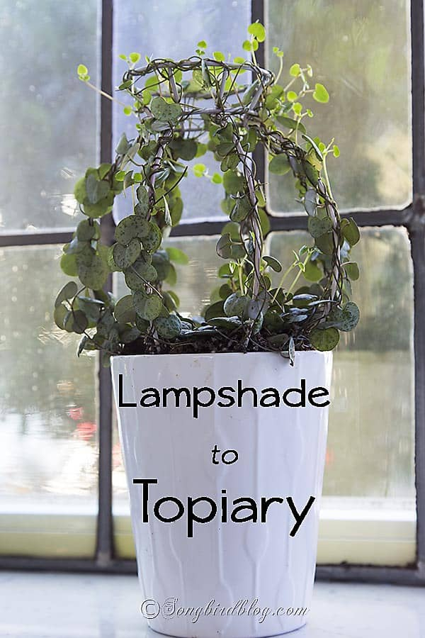 How to make the base for a topiary from an old thrifted lampshade. Via http://www.songbirdblog.com