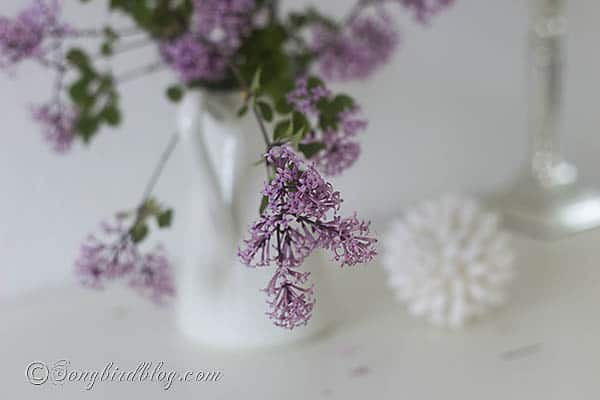 pink lilac mini flowers via Songbirdblog