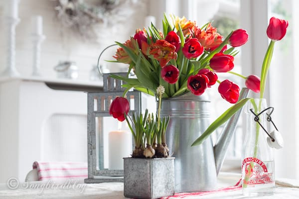 Farmhouse Spring decoration with red tulips in a galvanized can and a little vintage yoghurt bottle. A perfect colorful Spring decoration.