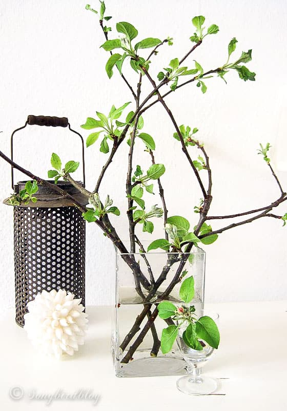 Branches with fresh green leaves in a clear vase. Rustic Spring decoration