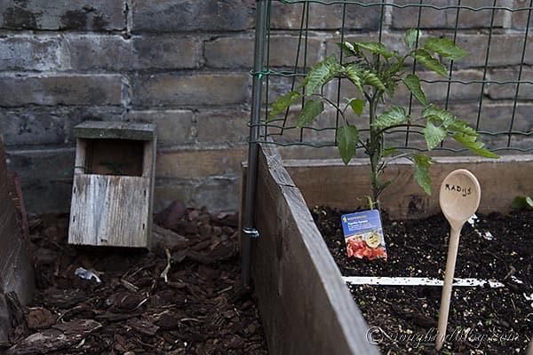 square food garden climbing plants support via Songbirdblog