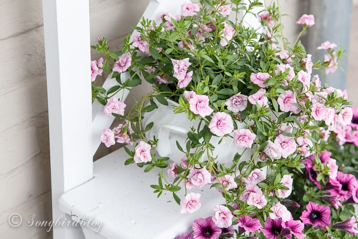 Pink blooms on a step ladder flower stand