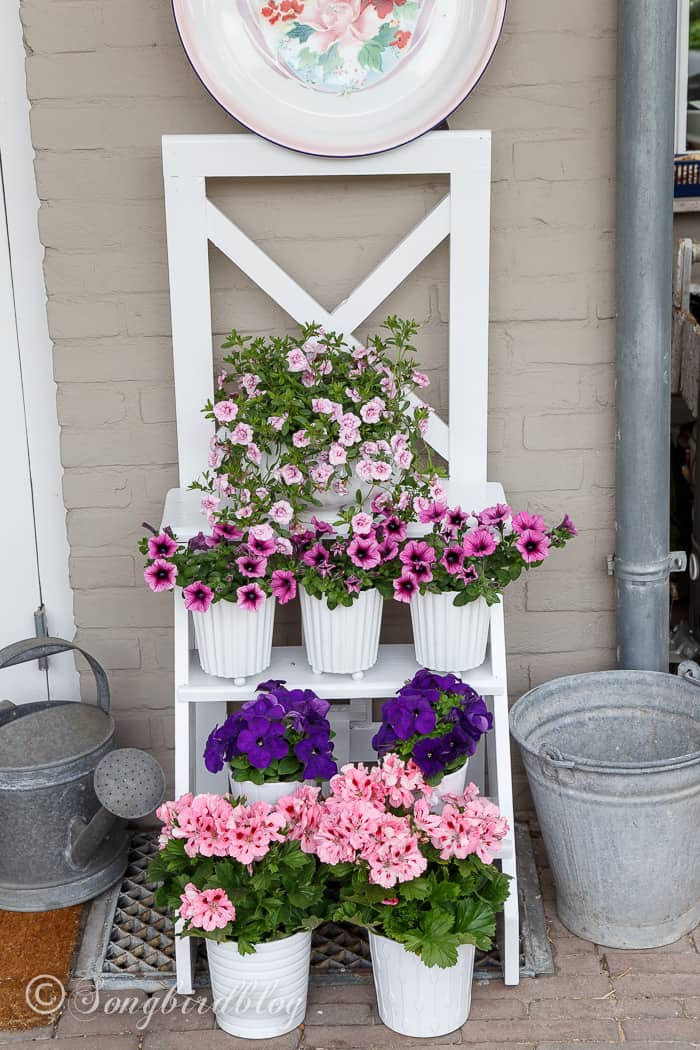 An old handmade ladder is used as a sweet step ladder flower stand