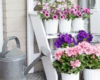 Step Ladder Flower Stand