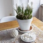 thumb white winter vignette with crocus bulbs