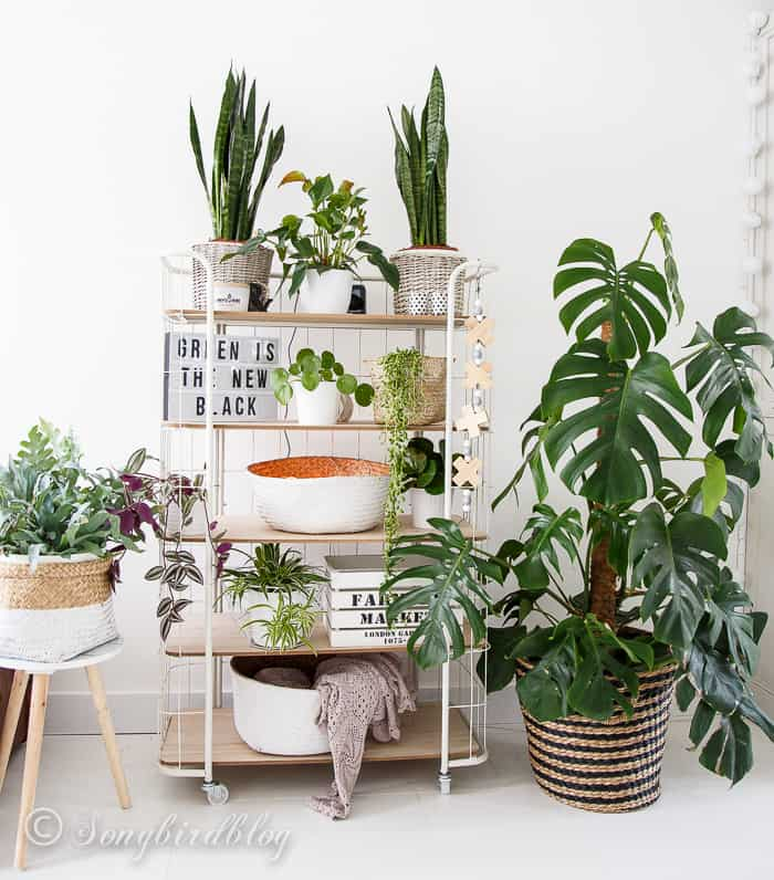 indoor plants urban jungle trolley bakkerskast kamerplanten